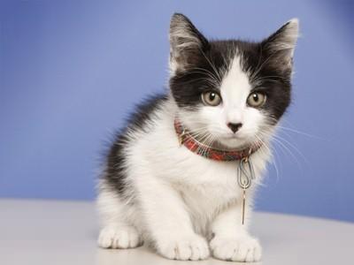 Image result for cute kitten