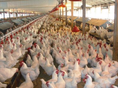 Poultry farmers encouraged to invest in new technology