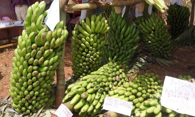 Banana more valuable than money offered