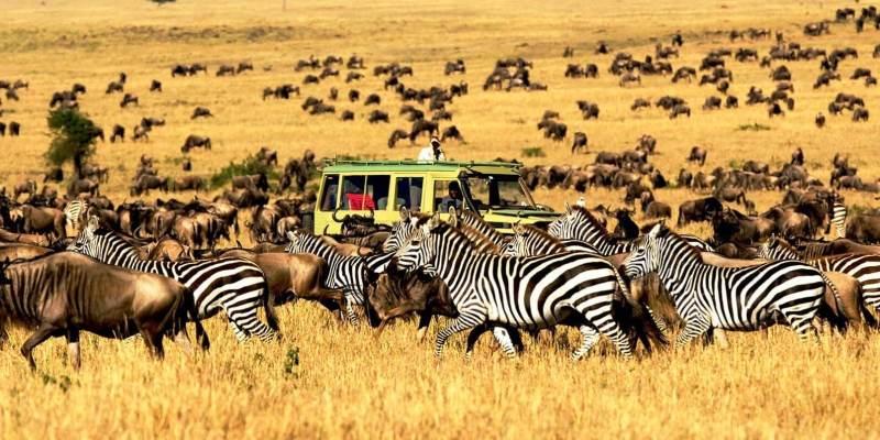 Tanzania safari channel