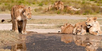 all-mothering culture of the savannah