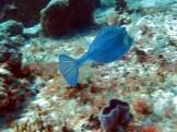 cedralpass_fish