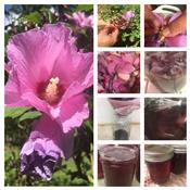 Rose of Sharon Jelly