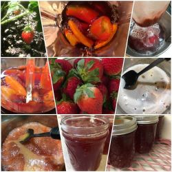 Pepper Jellies and Jams
