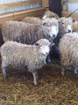 Quirky Bits-n-Pieces: Sheep