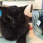 Krista Benskin: Magnus the Studio Cat