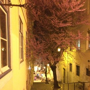 Spring 2017 Travel: Blossoms at night