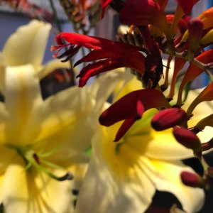 Filling the Well: Flowers on the credenza