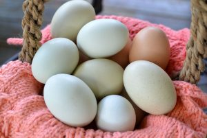 Tabitha's Heart: Farm Eggs!