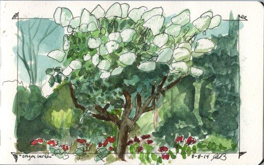 Oregon Garden - White Blossoms