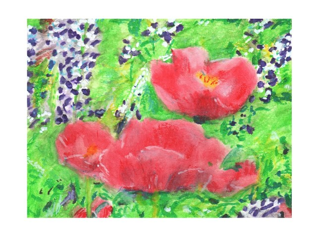Poppies and Lupin