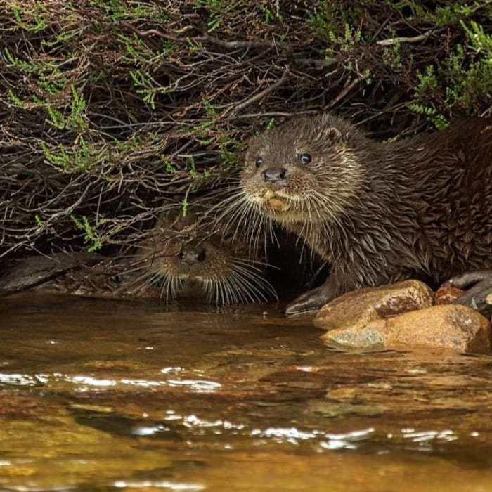 Scotland : Wildlife