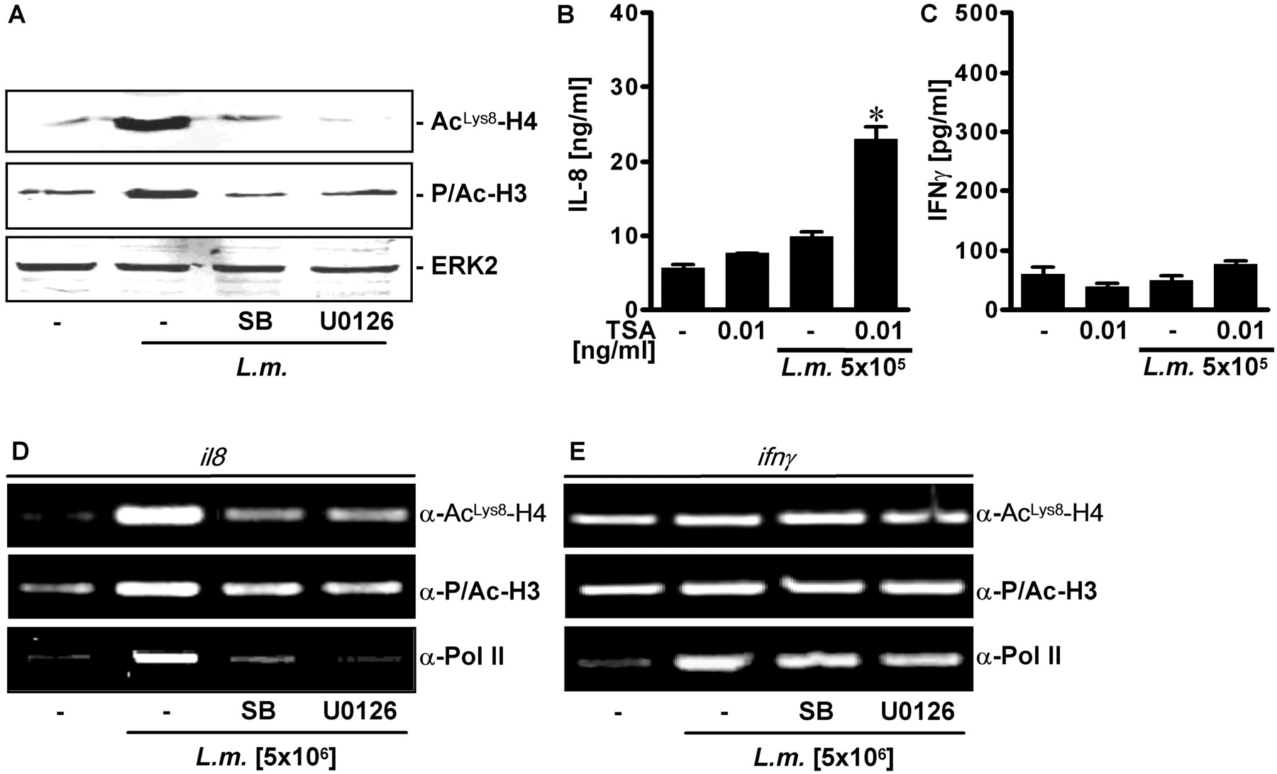Intracellular Bacteria Differentially Regulated Endothelial Cytokine Release By Mapk Dependent