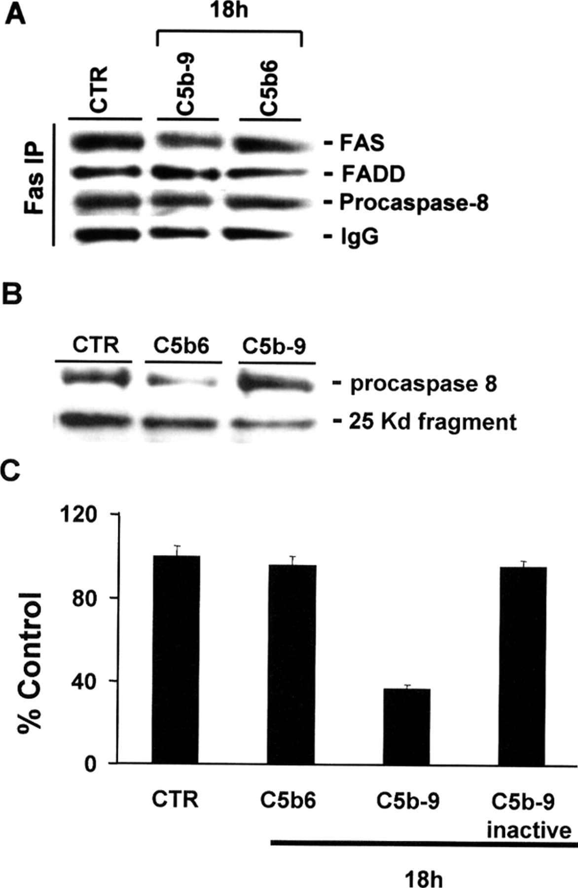 C5b 9 Terminal Complex Protects Oligodendrocytes From Apoptotic Cell By Inhibiting Caspase