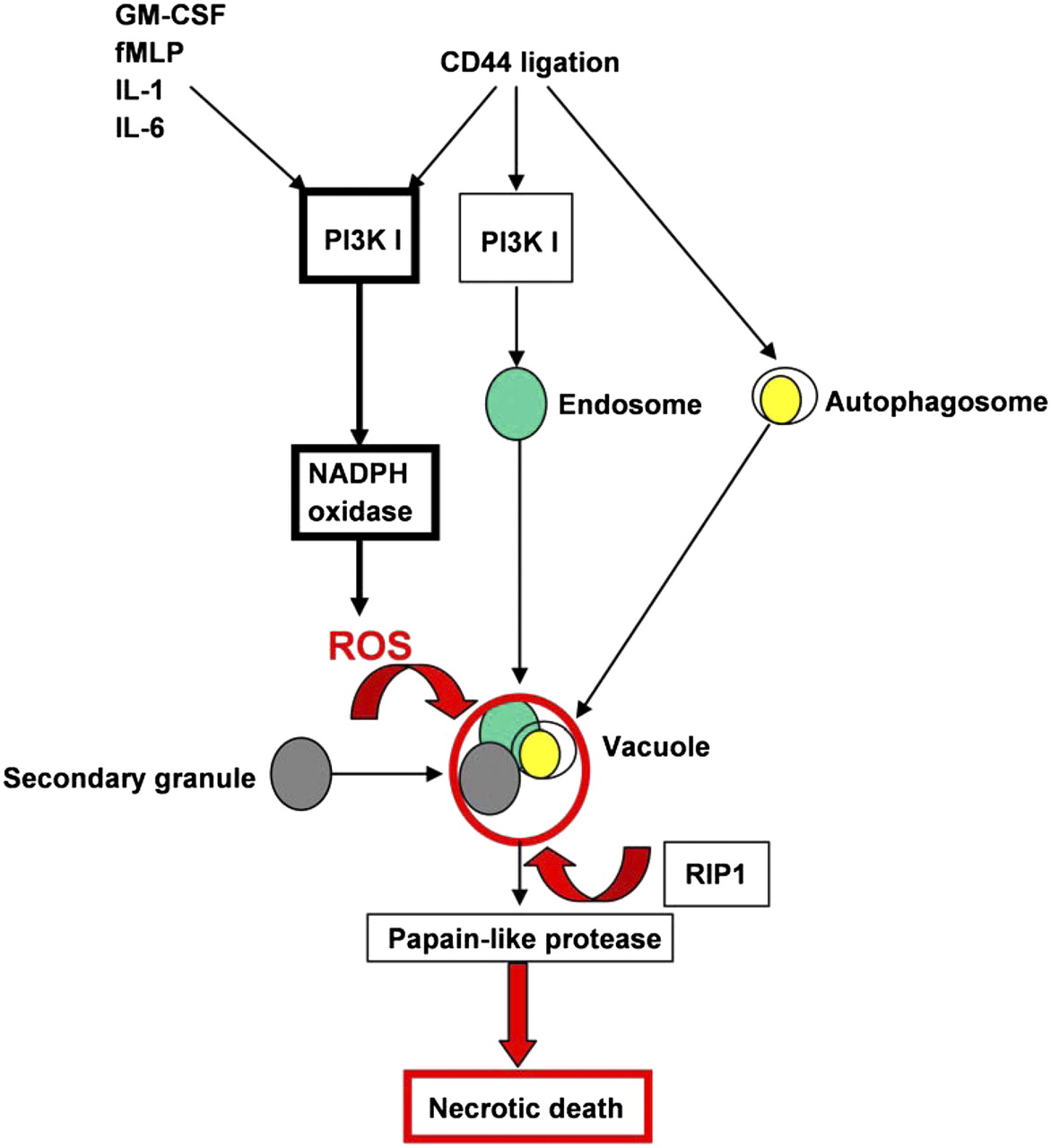 Inflammation Associated Autophagy Related Programmed