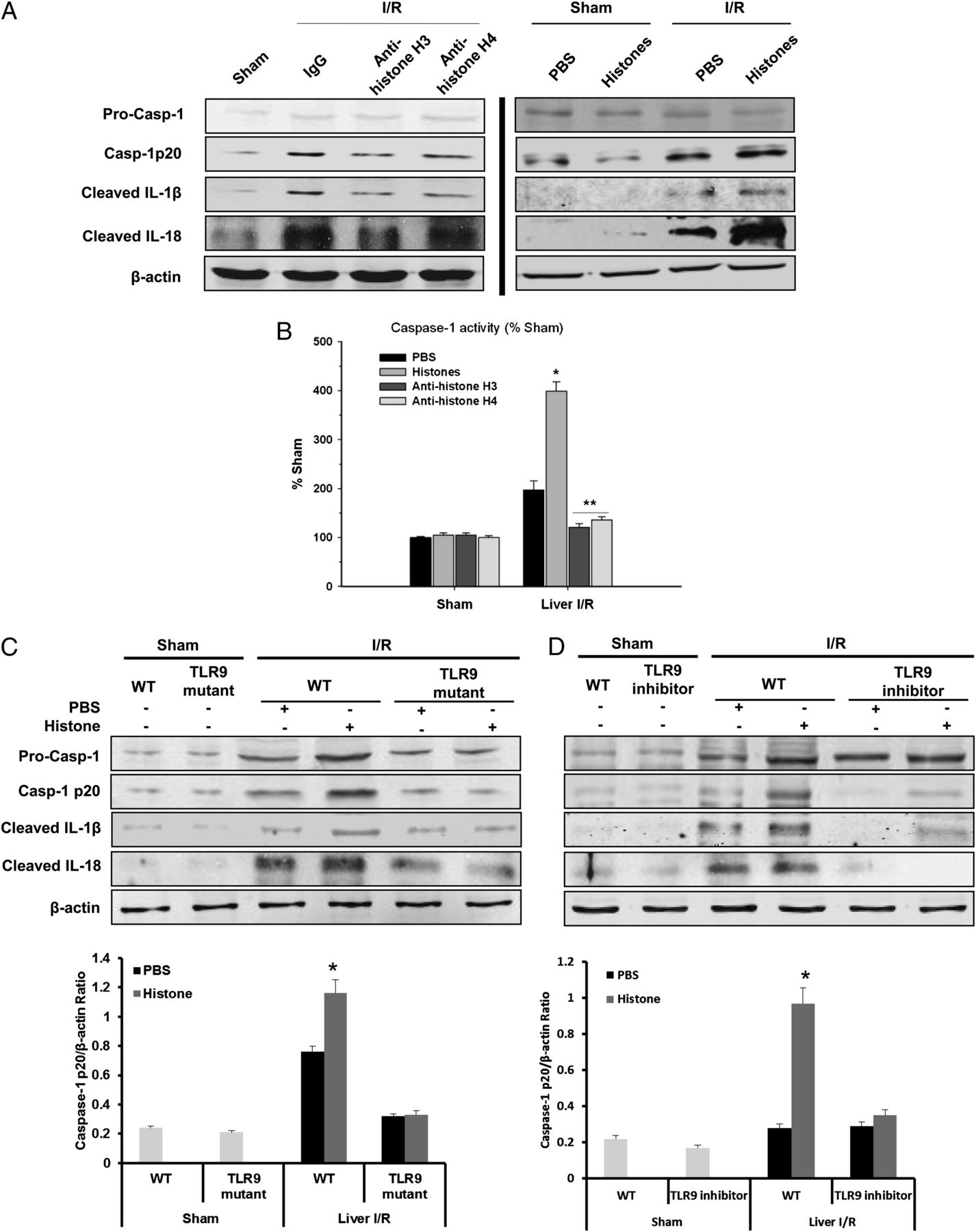 Histones Activate The Nlrp3 Inflammasome In Kupffer Cells