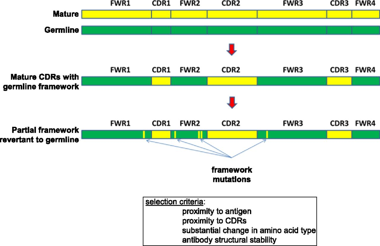 Antibo S Vrc01 And 10e8 Neutralize Hiv 1 With High Breadth And Potency Even With Ig Framework