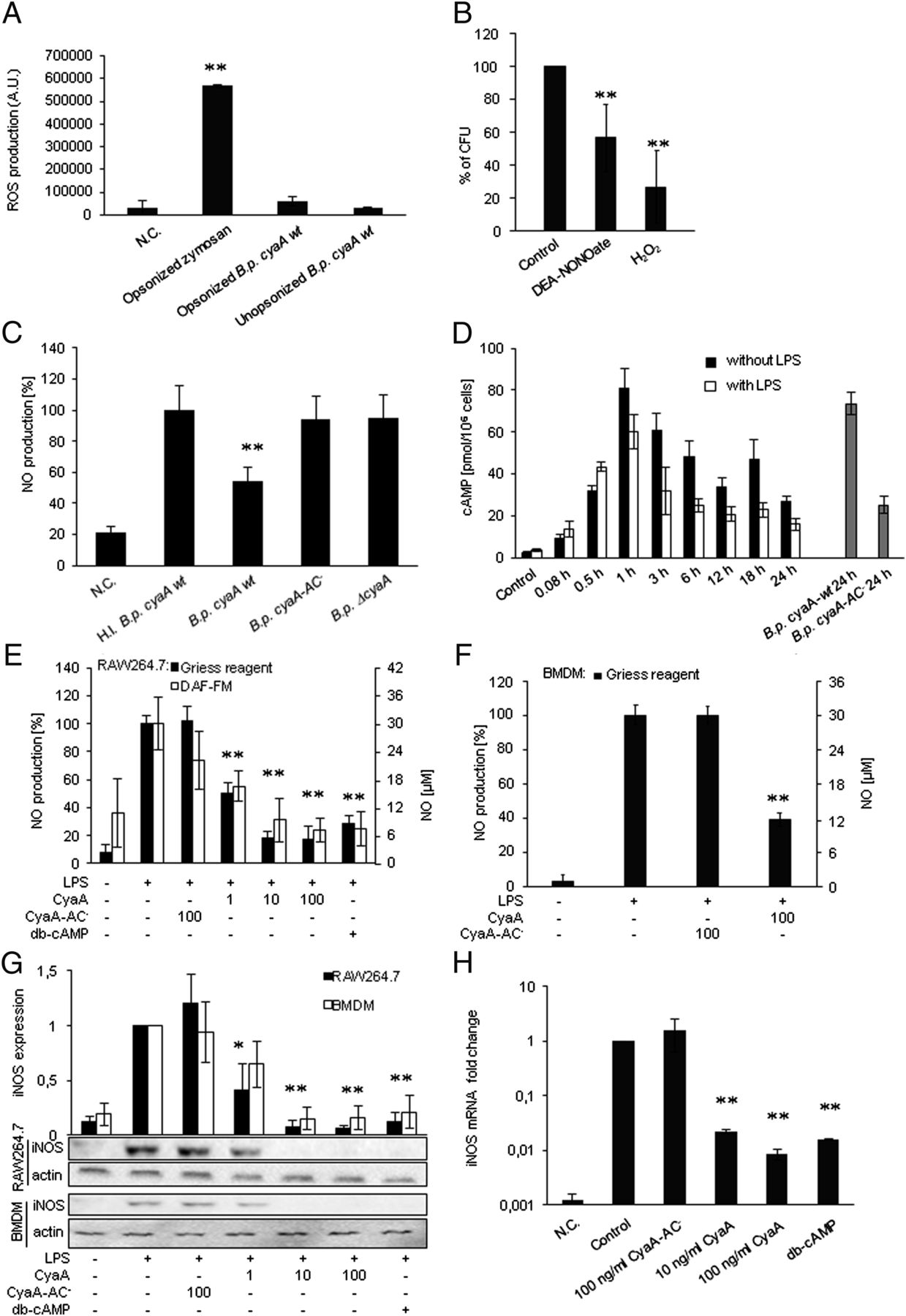 Bordetella Pertussis Adenylate Cyclase Toxin Blocks Induction Of Bactericidal Nitric Oxide In
