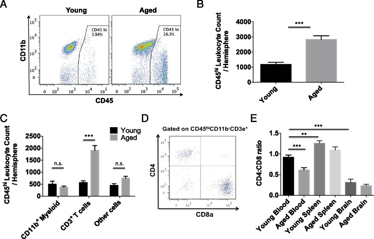 Age Associated Resident Memory Cd8 T Cells In The Central