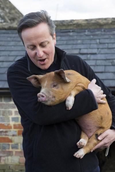 David Cameron avec pig