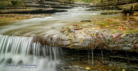 Nature photography at Tanyard Creek