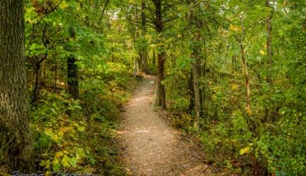 nature photography Nature Photogrpahy – Autumn in Bella Vista Arkansas Autumn at Tanyard Creek 37