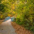 Nature Photography - Autumn in Bella Vista