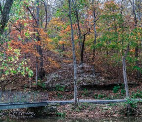 nature photography Nature Photography – Dogwood Canyon Dogwood Canyon 5