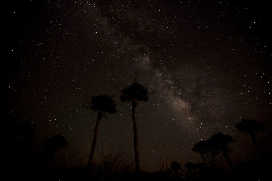 Palmetto Trees Against The Milky Way