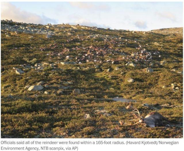 Reindeer_death_Norway_3