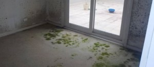 Mould in Carpet and Walls