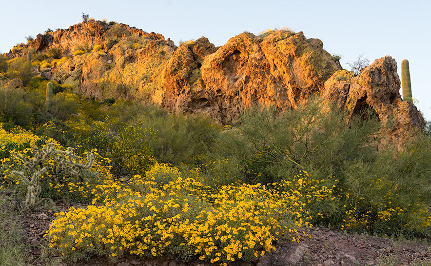 Lichen and Brittlebush
