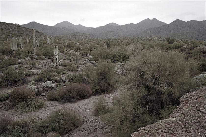The McDowell Mountains