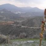 Horské květiny ve španělských horách regionu Alemría