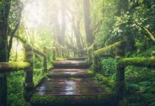 Změna, nová cesta, nový směr, zelený les, cesta lesem,