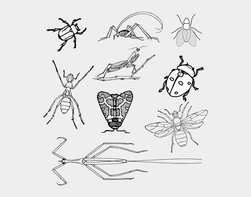 Nine Bugs Coloring Book Clip Art Realistic Bugs Colouring Pages Cliparts Cartoons Jing Fm