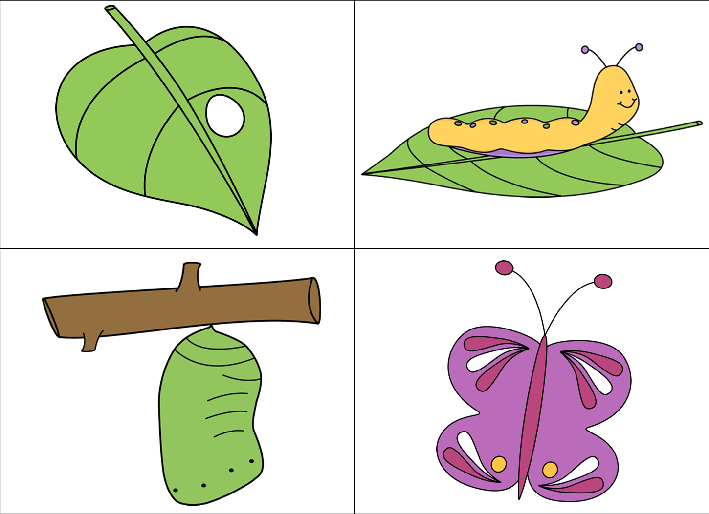 Butterfly Cycle Clipart Egg Life Pencil And In Color