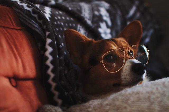 工作不必這麼累!高效率的聰明懶惰法