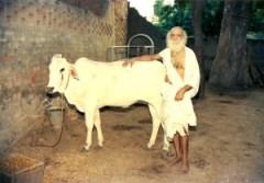 Maharajji