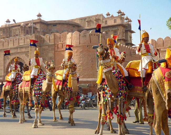 Camel Festival Bikaner - Rajasthan - India