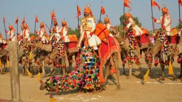 Desert festival - Jaisalmer - Rajasthan - India