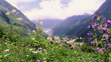 Valley of flowers - Uttarakhand - India