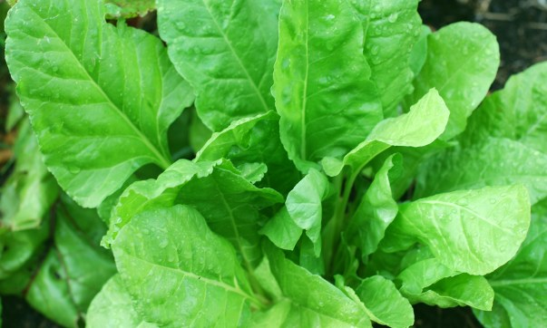 10 Health benefits of spinach