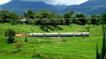 Palampur- Himachal Pradesh