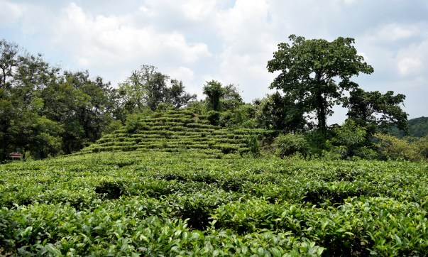 Best hill stations in Assam