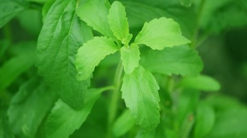 Top Five Surprising Fact About Stevia