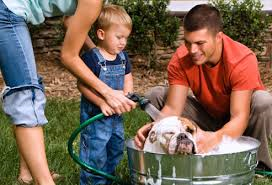 washing dog outside-bulldog