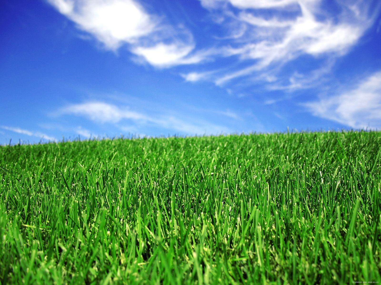 Green Lawn 1 YI25ANCA73 1600x1200jpg