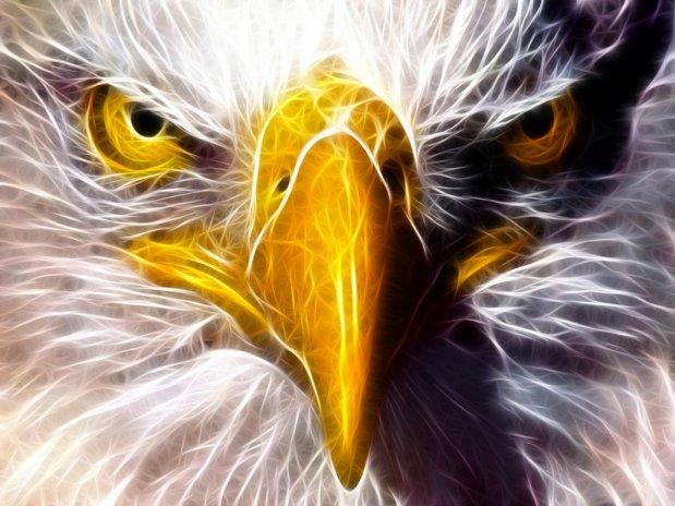 golden-eagle-eye