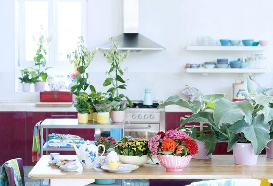 Kalanchoë woonplant van de maand juli